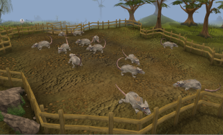 Giant_Rats
