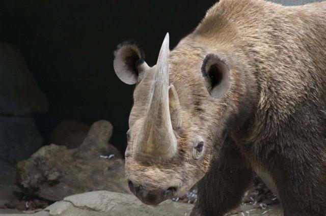 rhinobear_by_nvincabl