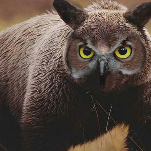 Dungeon Situational – Owlbear Encounters